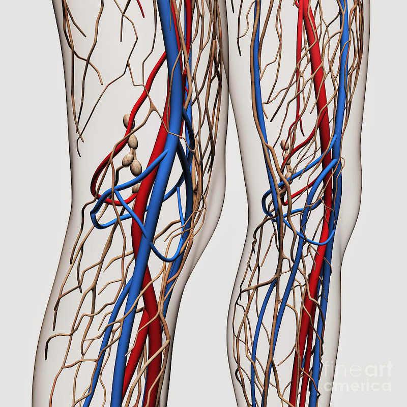 Eco Dooppler Arterial de Miembros Inferiores - Centro VascularCentro ...